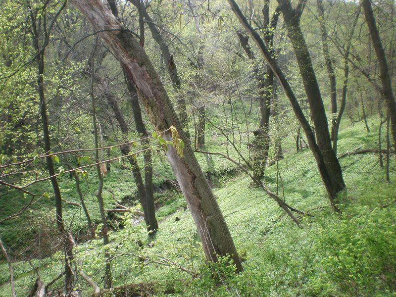Fontelle Forest 008