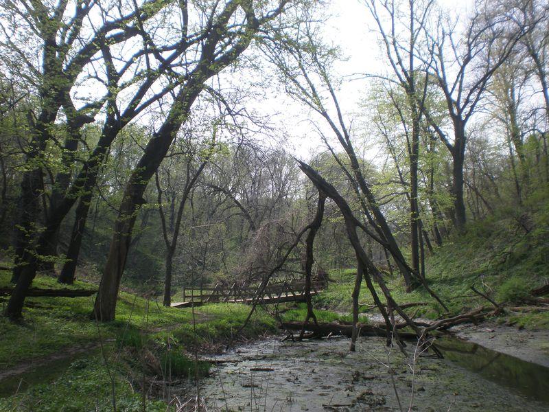 Fontelle Forest 010