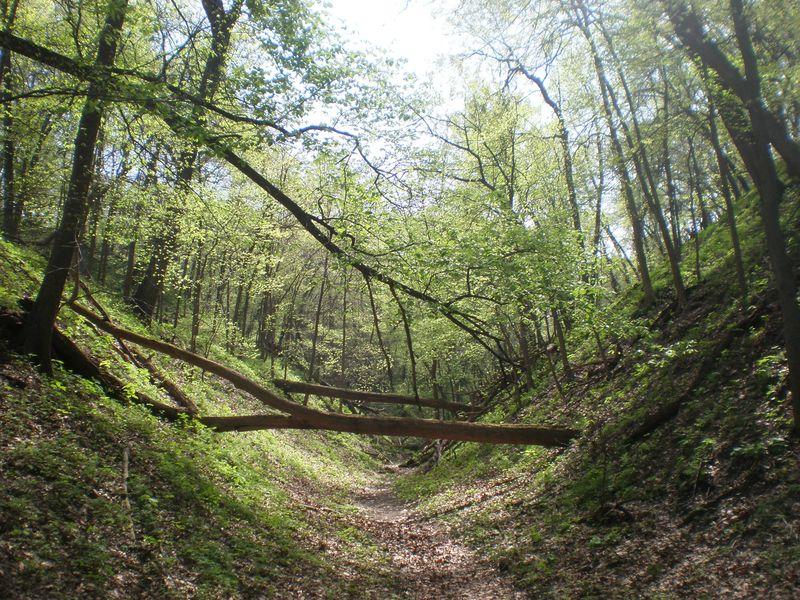 Fontelle Forest 022